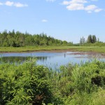 Swamp which yielded a Spanish coin