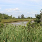 Swamp on Oak Island